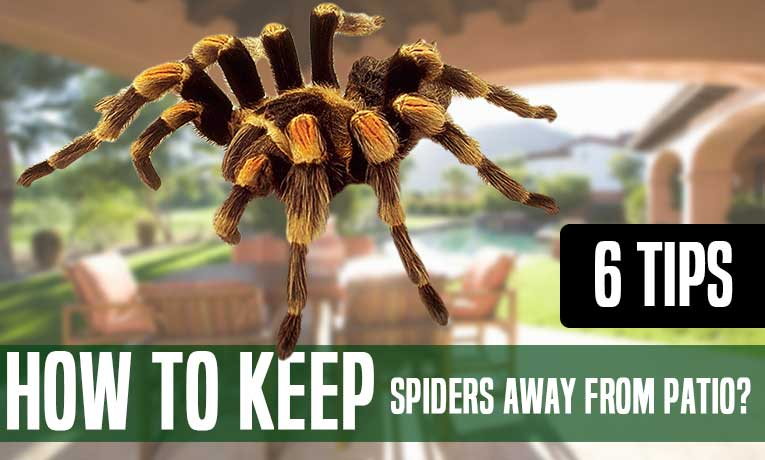 Keep Spiders Away From Patio