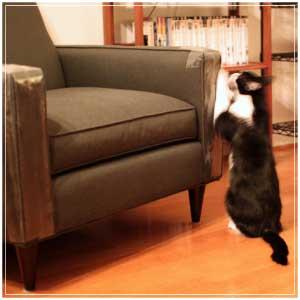 cat scratching on tape furniture