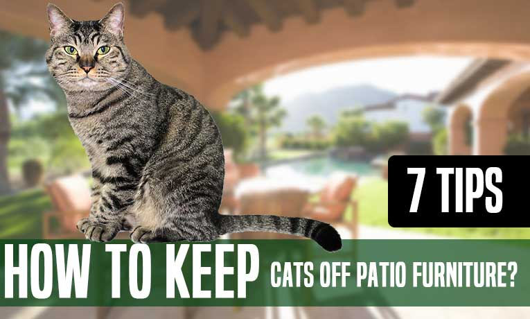 How To Keep Cats Off Patio Furniture