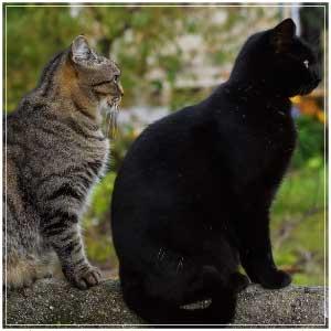 cats-target
