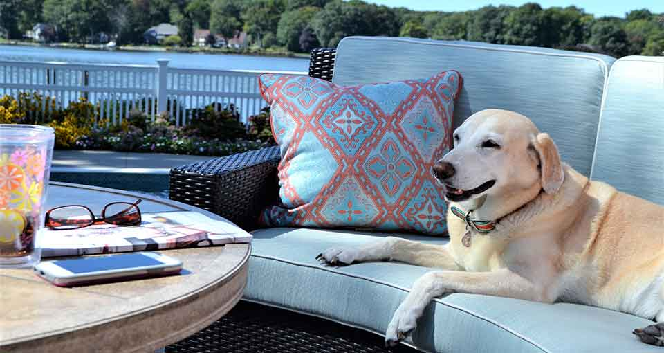 Dogs off Patio Furniture