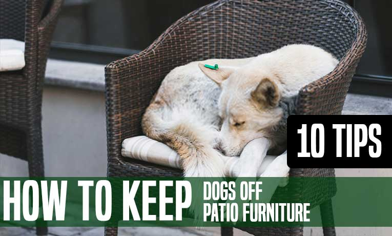 How to Keep Dogs off Patio Furniture