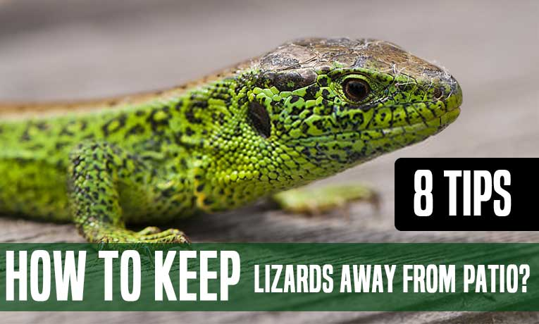 How-to-Keep-Lizards-Away-from-Patio