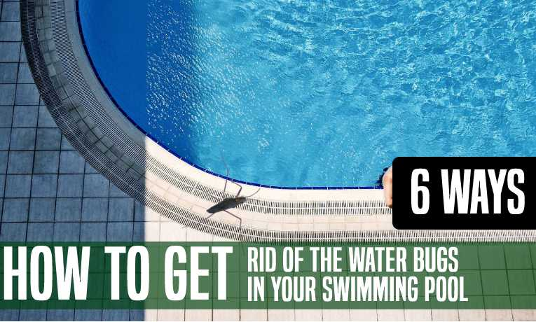 How to Get Rid Of the Water Bugs in Your Swimming Pool